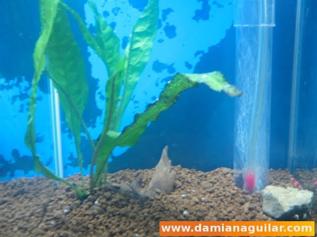 Montaje de un acuario desde el principio acuarios - Montaje de acuarios ...