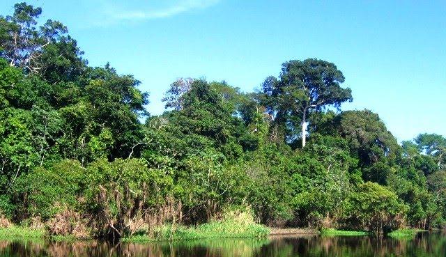 en pais tropicales: