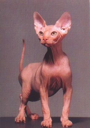 keanu movie cat