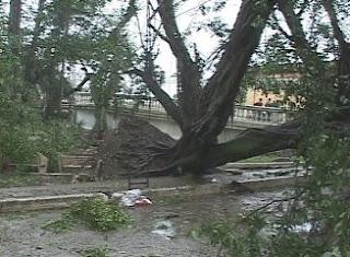 """Aprovechan unos 740 mil metros cúbicos de madera de árboles derribados por """"Sandy"""""""