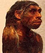 neander-portrait.jpg