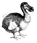 Shop en dodo