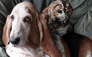 [Image: Foto+Anjing+Bareng+Burung+Hantu.jpg]