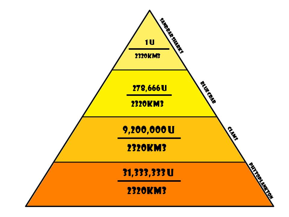 Energy Pyramid Trophic Levels