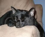 Cat 8/2000-2/2009