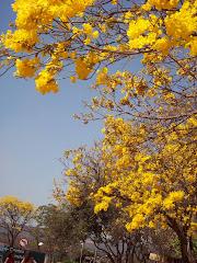 Primavera na UnB