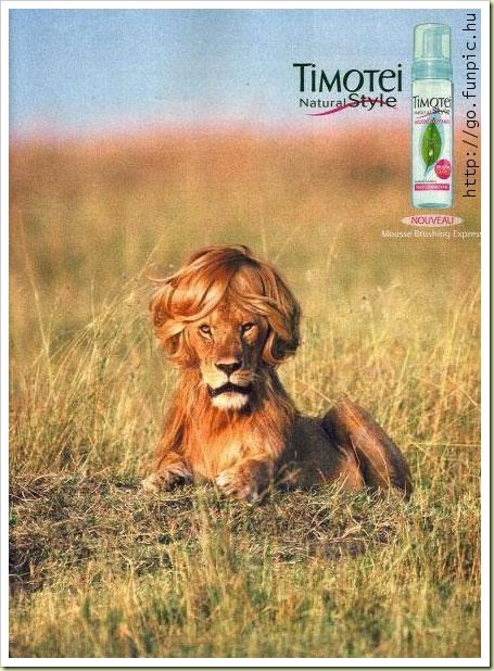 10-funny-animals-timotei-lion-commercial.jpg