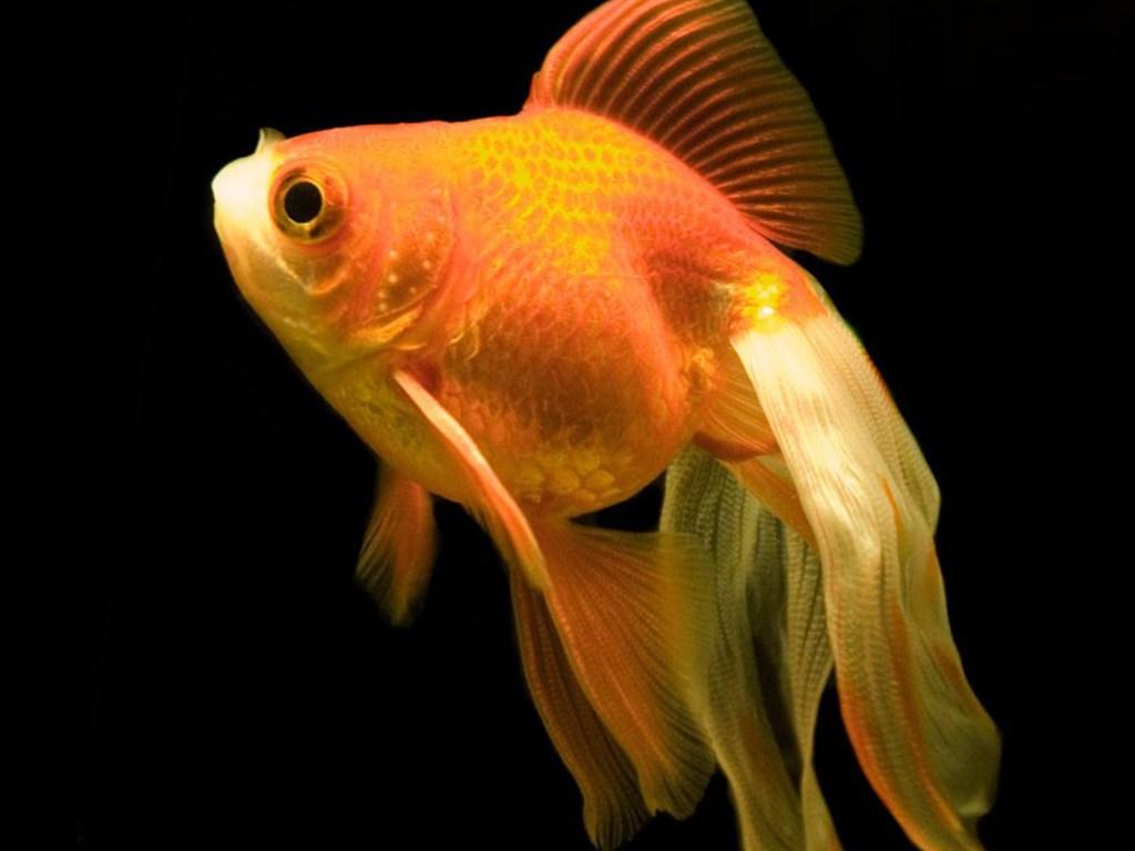 http://4.bp.blogspot.com/_EAViqbzwc_s/TKGO-ENfExI/AAAAAAAABWc/RknxepI2HLI/s1600/fish+(8).jpg