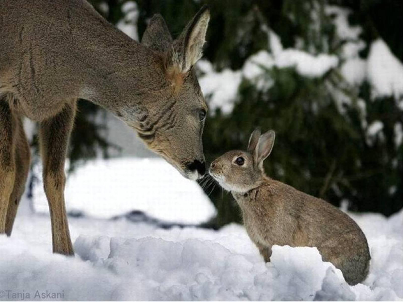 http://4.bp.blogspot.com/_EAViqbzwc_s/TN_Pu_qCwxI/AAAAAAAACB0/7eIYuowAk10/s1600/Deer-and-Rabbit.jpg