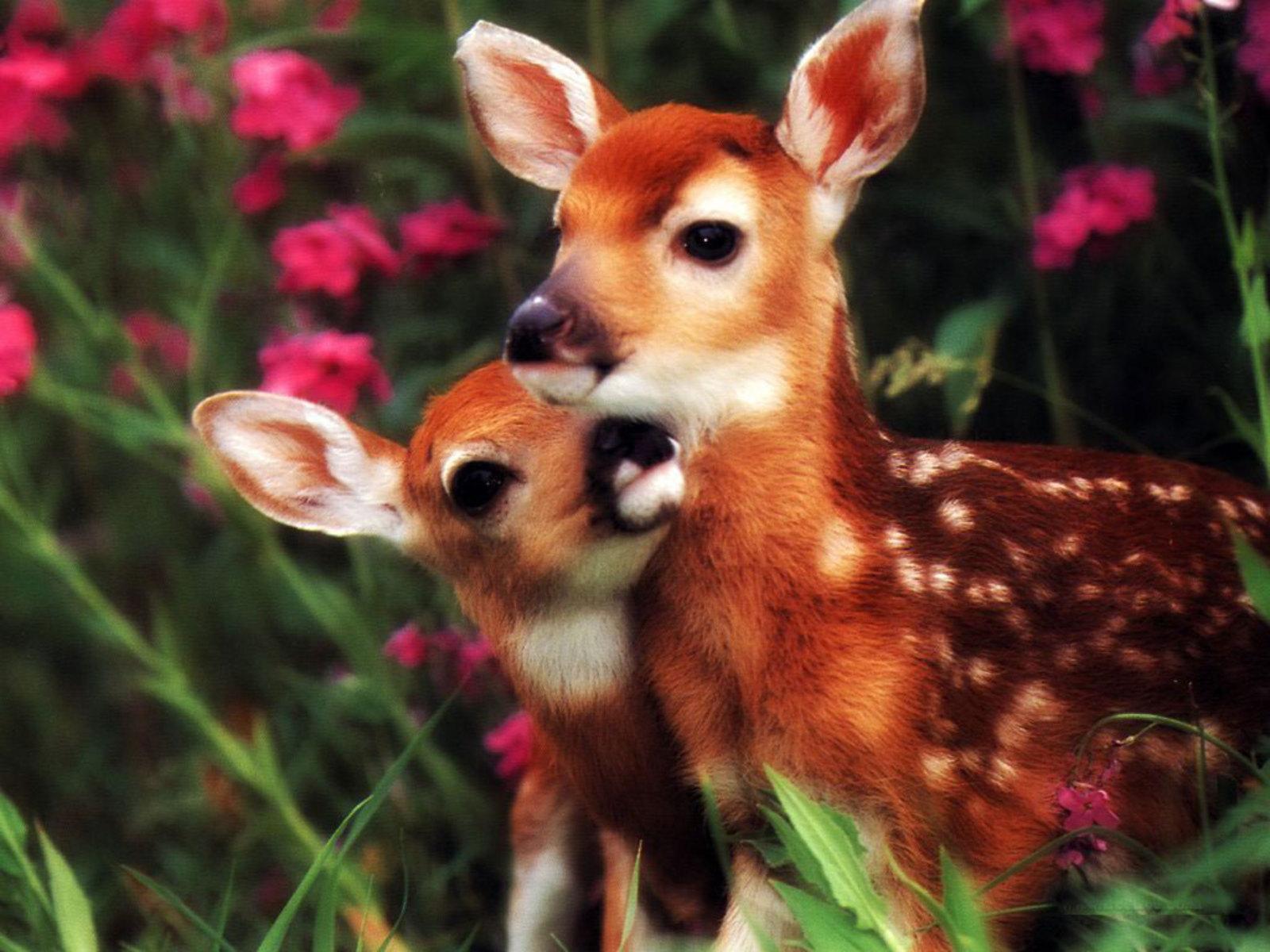 http://4.bp.blogspot.com/_EAViqbzwc_s/TN_QE97ayQI/AAAAAAAACCU/KxeVPjtpXCo/s1600/mom-n-baby.jpg