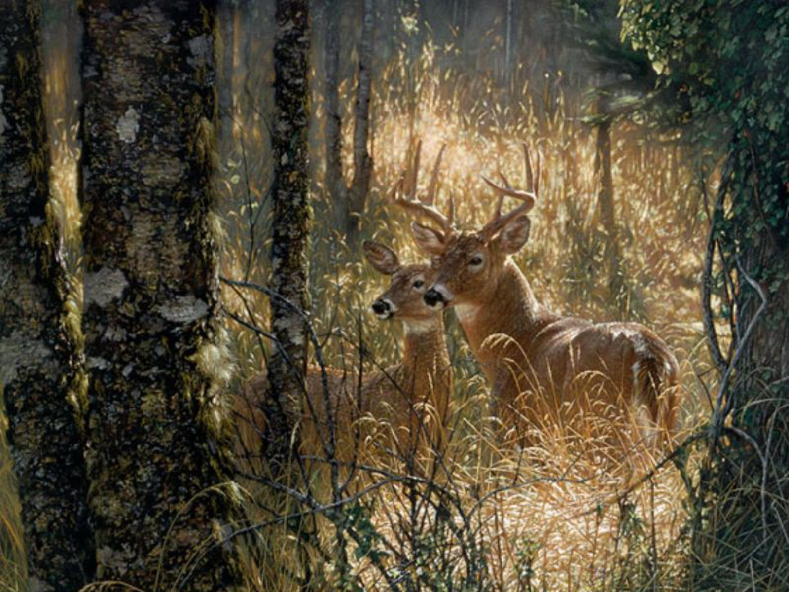 High Definition deer wallpapers,High Definition deer wallpaper,High