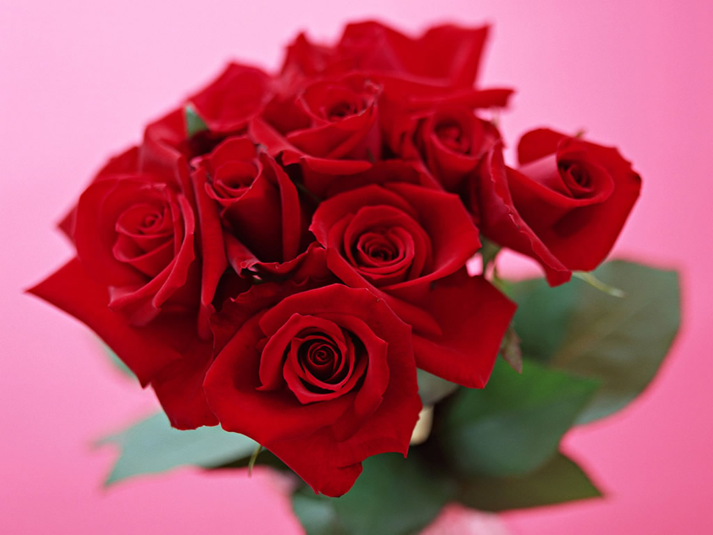 High definition photo and wallpapers hd valentine flower - Valentine s day flower wallpaper ...