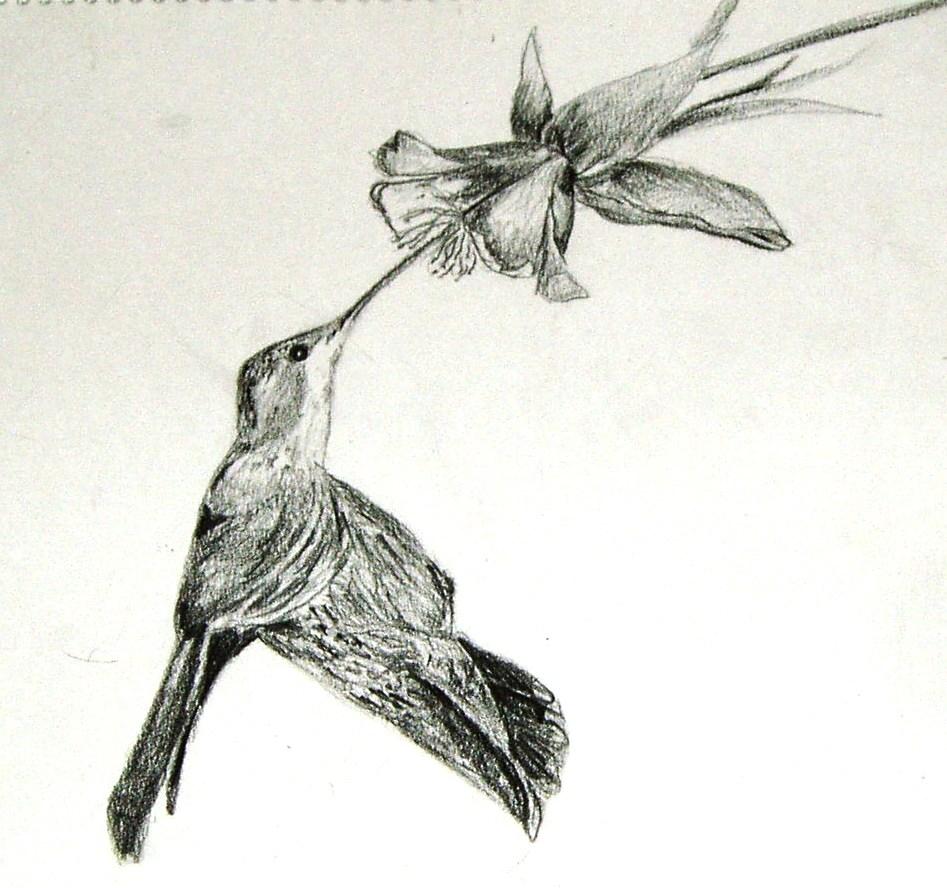 Pencil Sketches Birds  Drawing Pencil