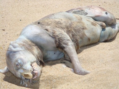 Mystery Creature Found Dead in Panama