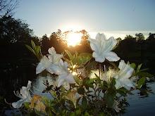A primavera chegando no parque Centenário