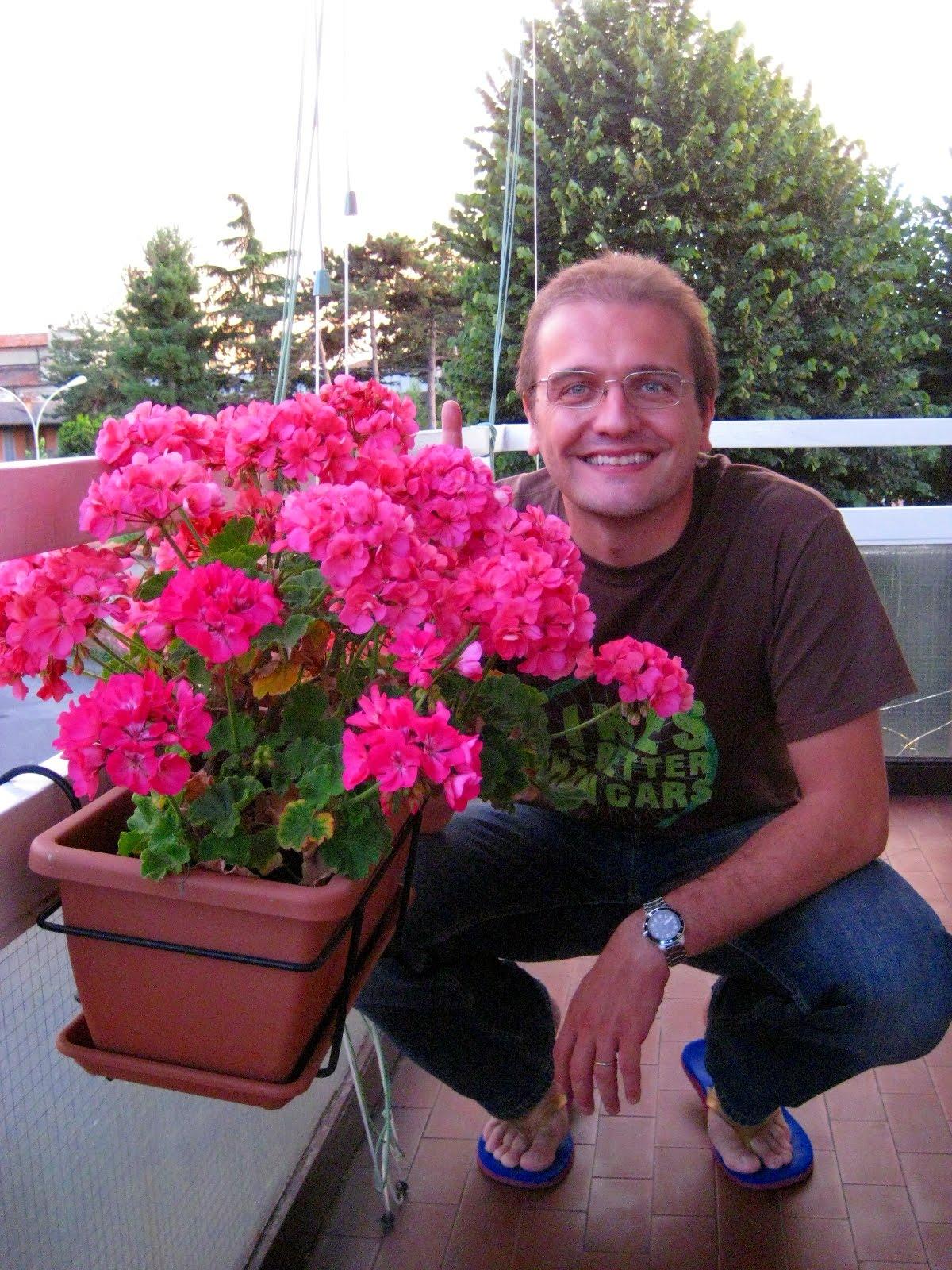 Sacchibelli gerani speciali for Fiori gerani