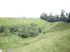 Campo e floresta