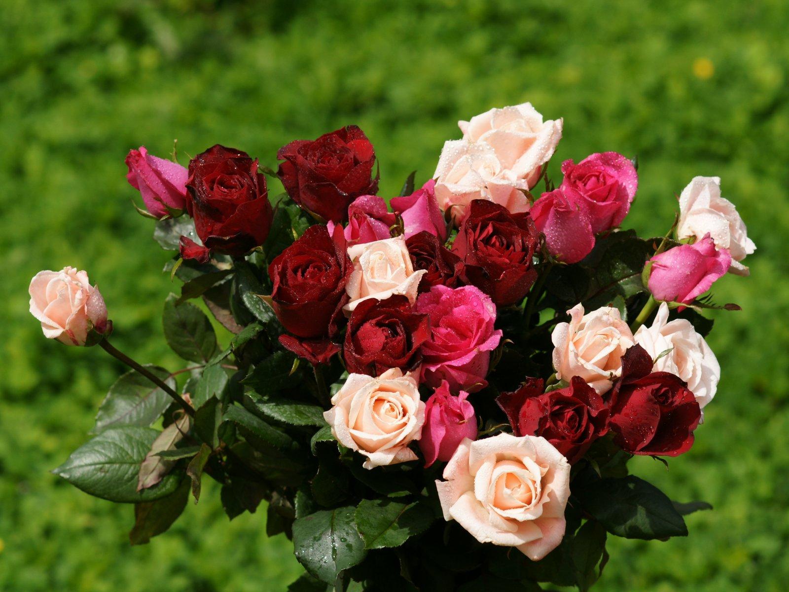 http://4.bp.blogspot.com/_EFOkLzJCJeA/TFU6Dip6TkI/AAAAAAAAAQ4/-4eOLge6EWI/s1600/wallpapers_rose_bouquet-dsc00851.jpg