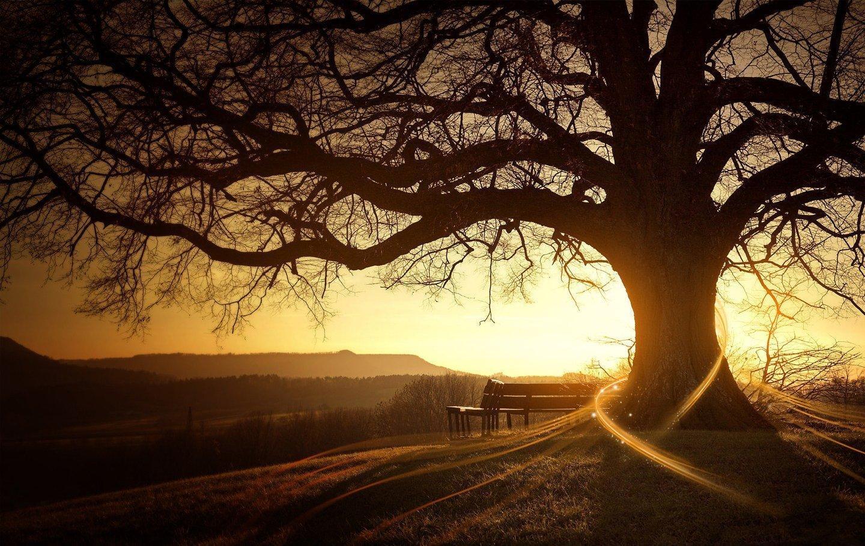 http://4.bp.blogspot.com/_EFOkLzJCJeA/TFVGf2SZp7I/AAAAAAAAATA/sAgJUMoHjIo/s1600/sunset-glow-trees-beautiful-scenery.jpg