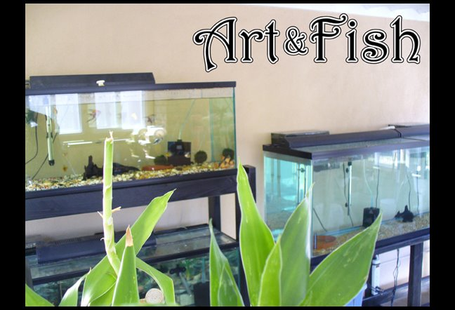 Art and Fish