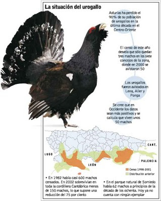 The Capercaillies disappear in Asturias.