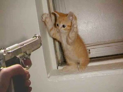 siopao, cat, cute, cute cat, pussy, funny, funny cat, funny pictures, funny pics, gun pointed at cat, gun at can, cats and guns