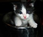"""Bottlefed Baby Kitten """"Felix"""""""