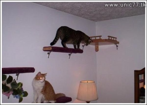 Dinding tangga untuk kucing yang unik