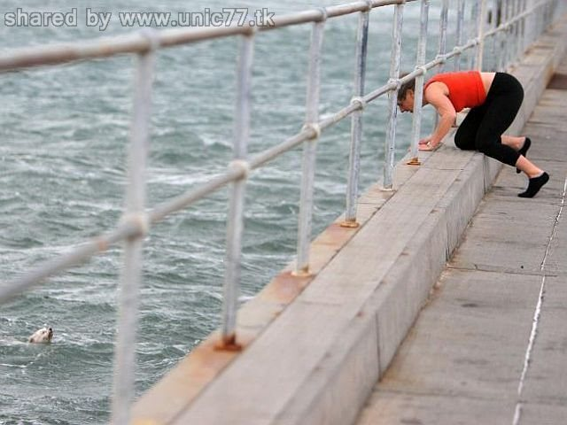 http://4.bp.blogspot.com/_EHi0bg7zYcQ/TJS1o0CS3vI/AAAAAAAAD40/yrB2NIhvwV8/s1600/bibi_rescued_07.jpg