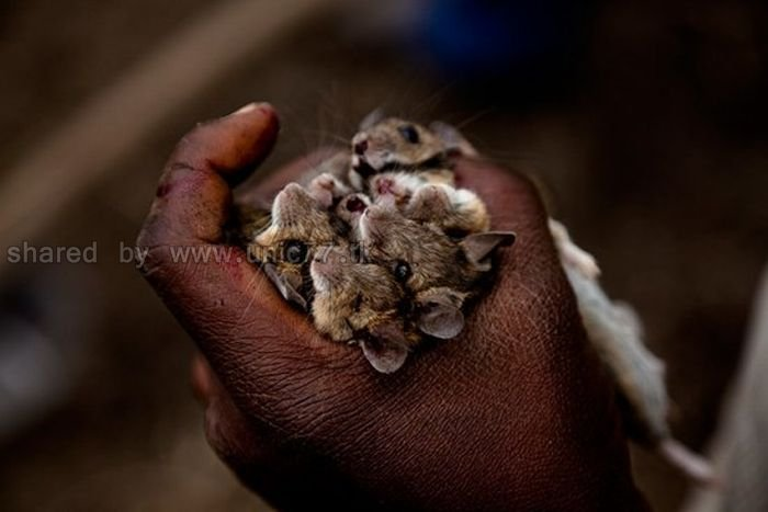 http://4.bp.blogspot.com/_EHi0bg7zYcQ/TL6ZfGCnncI/AAAAAAAAPHo/6YqoqwSu9cE/s1600/rat_catchers_13.jpg