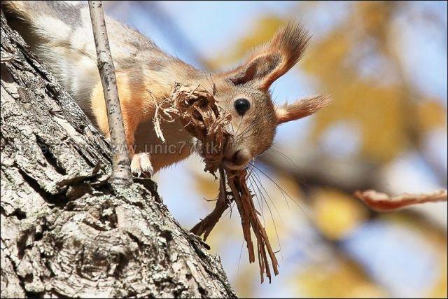 http://4.bp.blogspot.com/_EHi0bg7zYcQ/TLahhB-XJ8I/AAAAAAAANGs/o5wjF7dbB10/s1600/these_funny_animals_515_640_10.jpg