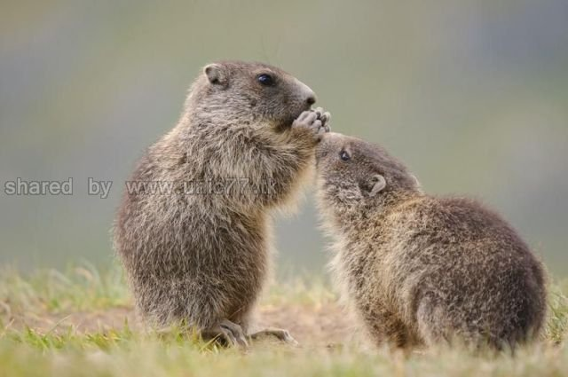 http://4.bp.blogspot.com/_EHi0bg7zYcQ/TLajZvbR_EI/AAAAAAAANHM/RmGc4NOWJaI/s1600/these_funny_animals_515_640_14.jpg