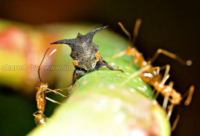 http://4.bp.blogspot.com/_EHi0bg7zYcQ/TLajaI17NFI/AAAAAAAANHk/WuqO45Y4xP8/s1600/these_funny_animals_515_640_17.jpg