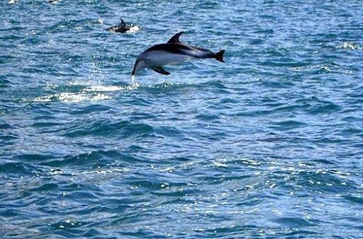 с дикими дельфинами....