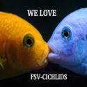 FSV-CICHLIDS