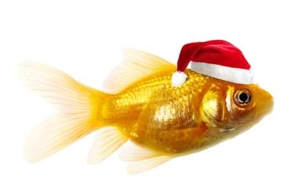 Llego la navidad !!!! Christmas-fish