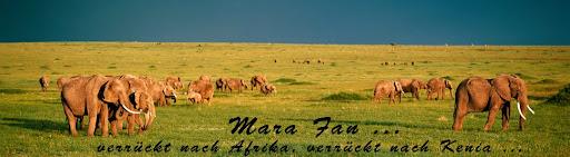 Mara Fan
