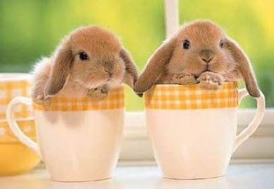 http://4.bp.blogspot.com/_ELzM_S573r8/R96f56gwKjI/AAAAAAAAFCg/hUTXMw9Hb6I/s400/baby-bunnies.jpg