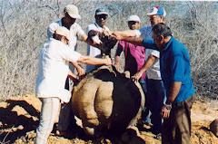Um grande xilopódio do mamãozinho-de-veado