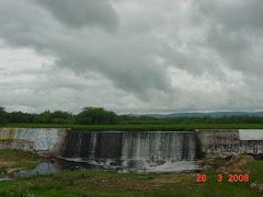 Uma represa tomada pela baronesa ou aguapé