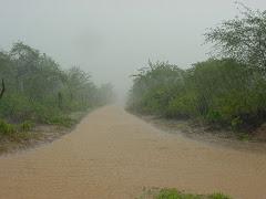 Água de chuva na caatinga III
