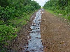 Água de chuva na caatinga I
