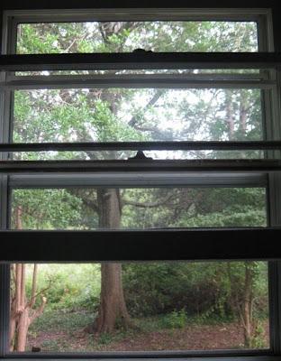 Kitchen window - view now.