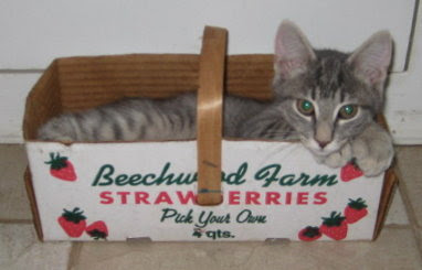 Riley resting in the strawberry basket