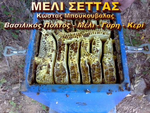 ΜΕΛΙ ΣΕΤΤΑΣ