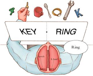 En enteresan 7 psikolojik çalışma… split brain 5B1 5D