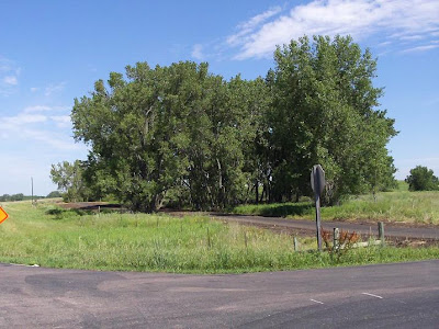 small grove of trees along bike trail, Highway 19, Lake Madison,  SD