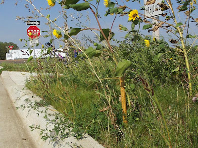 high weeds along bike trail