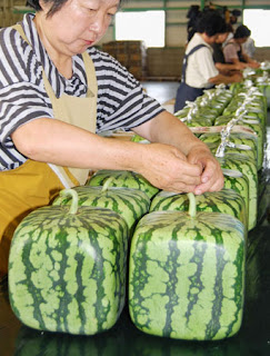 japanese square-shaped watermelon
