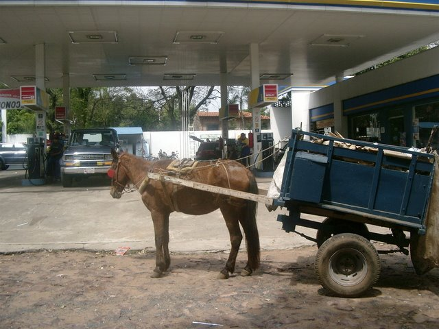 BASTA DE USAR ANIMALES COMO ESCLAVOS